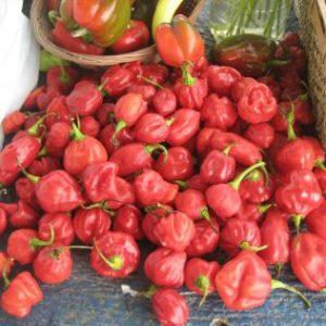Seasoning peppers